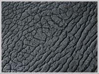 shark leather